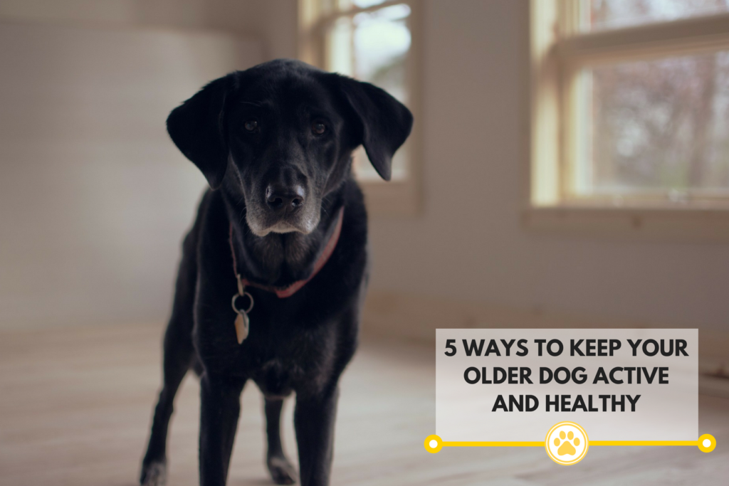 ways to keep an older dog active