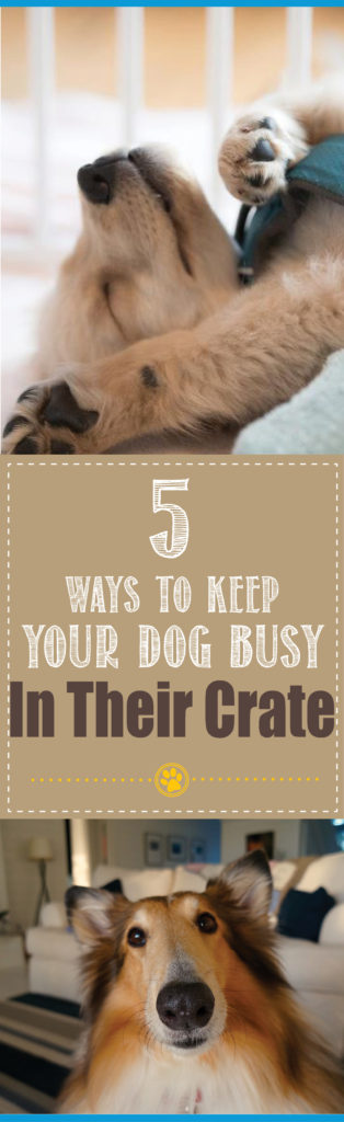 dog busy in crate