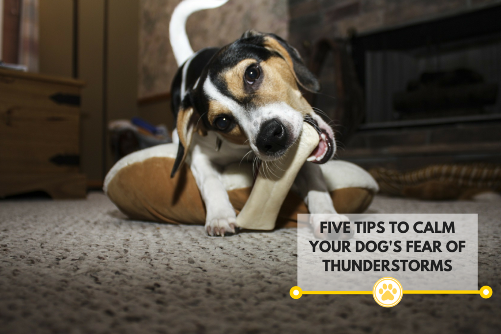 5 Tips to calm your dog's fear of thunderstorms