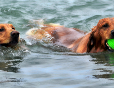 Tips to help get your dog swimming