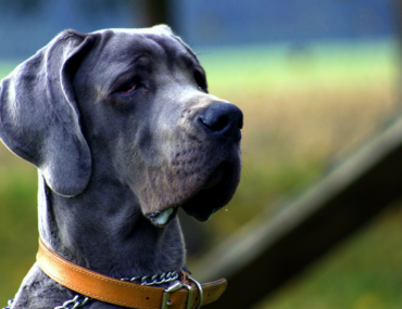 How to keep your older dog active
