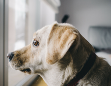Easy ways to help your anxious dog during thunderstorms
