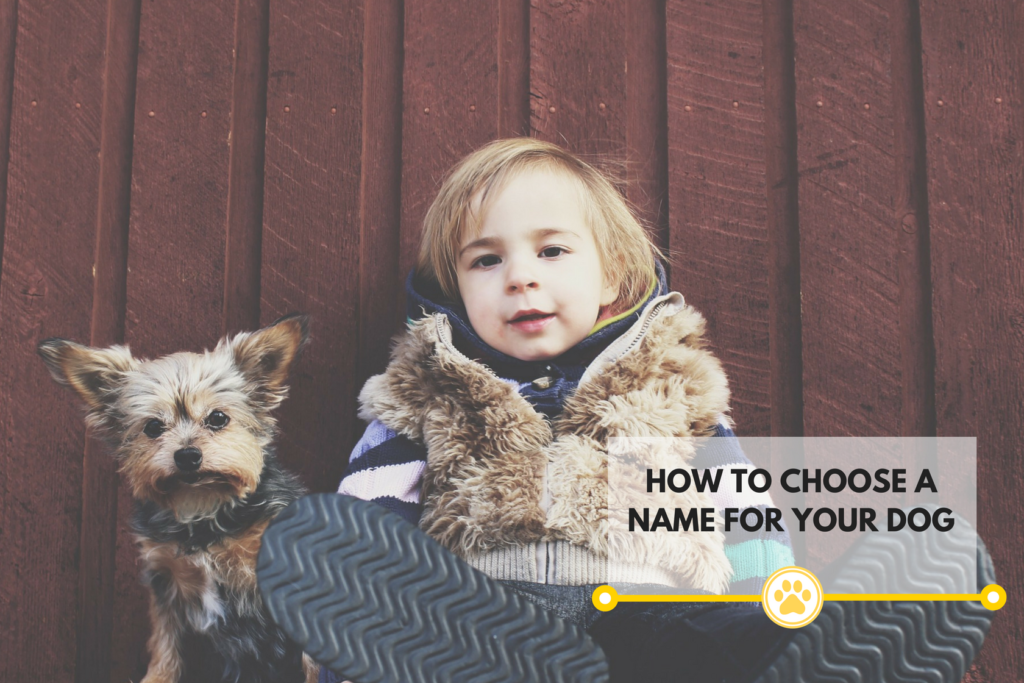 Picking a name for your dog