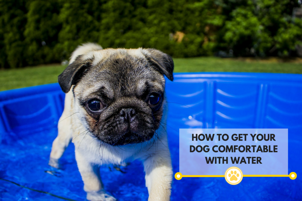 Ways to get your dog comfortable around water