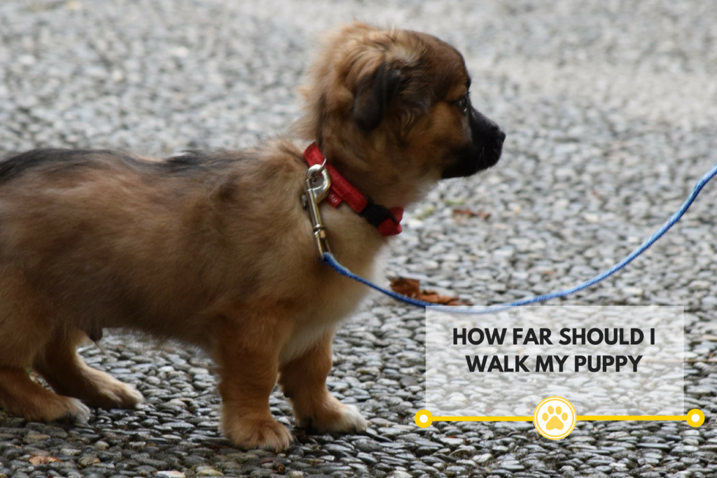 Ways to tell how far you should be walking your dog