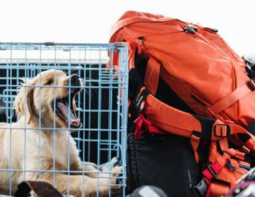 activities to keep dog busy in their crate