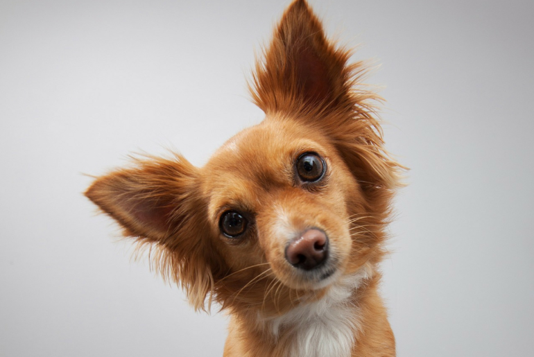 Tips to pick a name for your dog