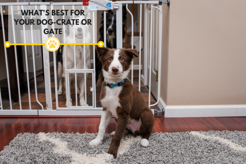 How to tell if a gate or crate is best for your pet