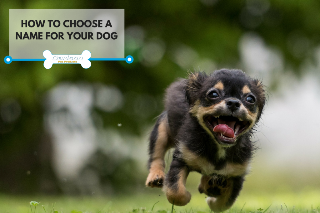 Here's how to decide on a name for your dog!