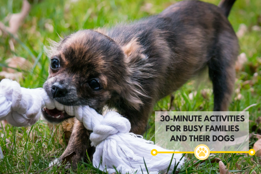 30 minute activities you can do with your dog!
