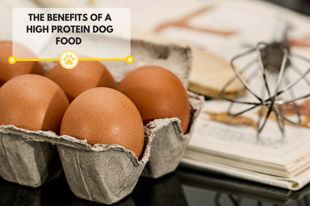 The Benefits of a High Protein Diet for Your Dog