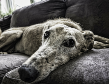 Great activities to keep your dog busy indoors