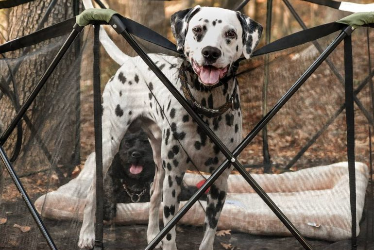 The pros and cons when bringing your dog camping