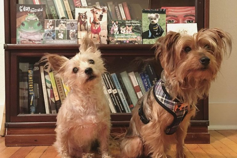 adopted dogs Joey and Rufus