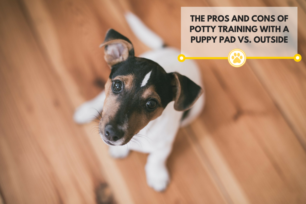 Training your dog with potty pads