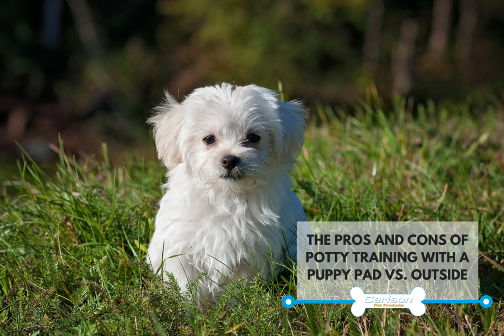 Potty training your puppy outside