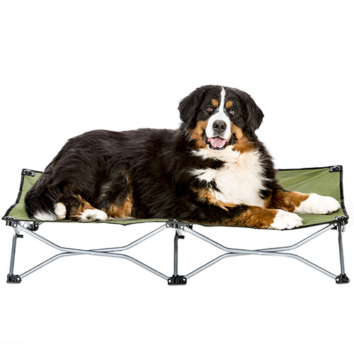 carlson large green dog cot