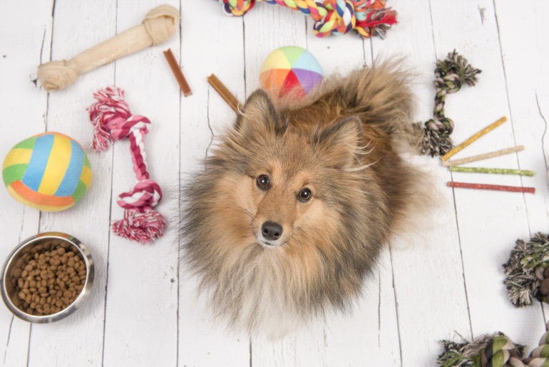 Dog toys that could be dangerous