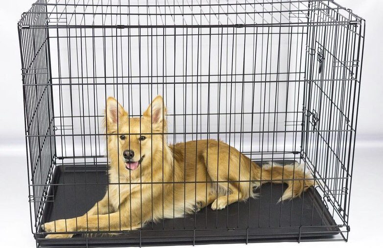 Tips To Get Started Crate Training a Dog