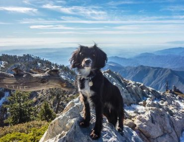 ultimate hiking partner