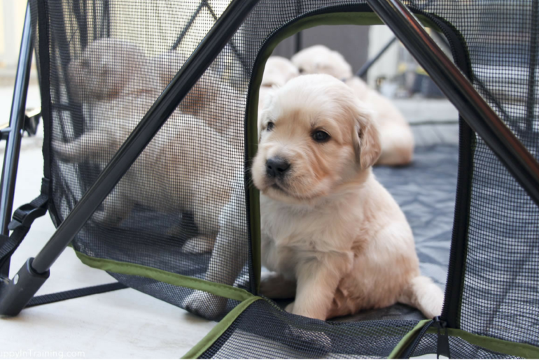 Portable Pet Pen
