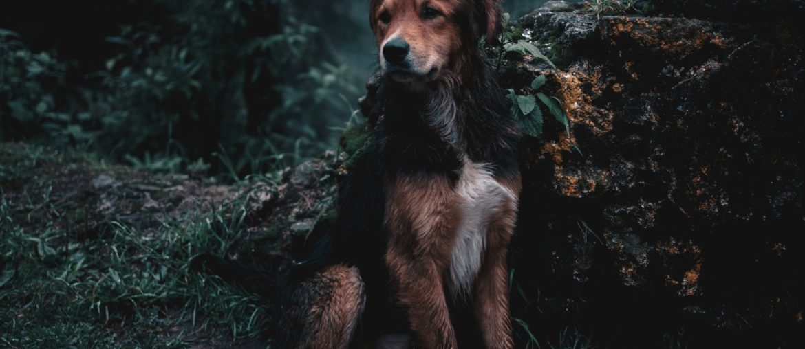 Tips to Ensure that Your Dog Doesn't Get Lost