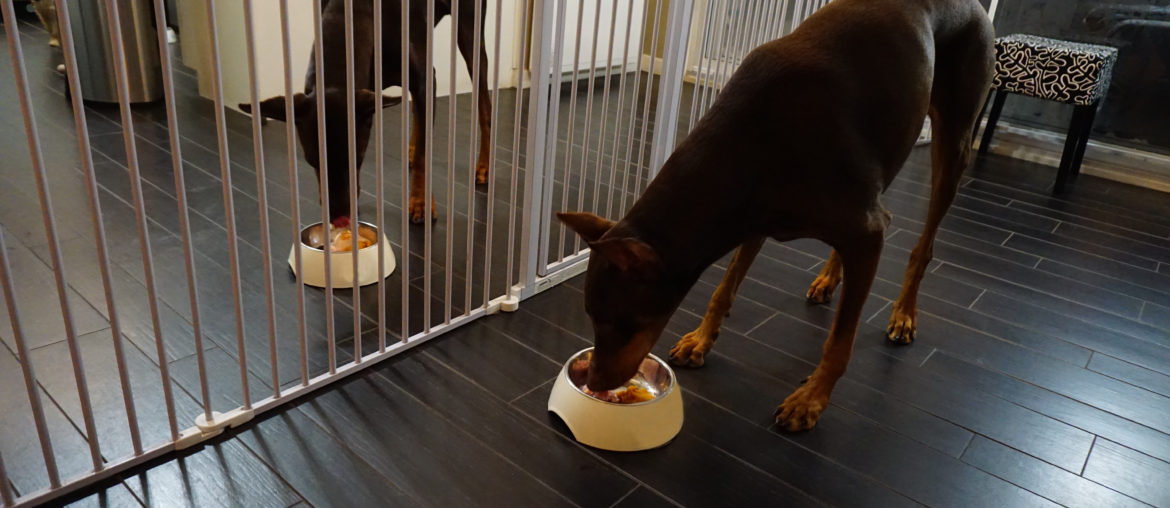 A Homemade Diet May Be The Answer to Your Dog's Obesity