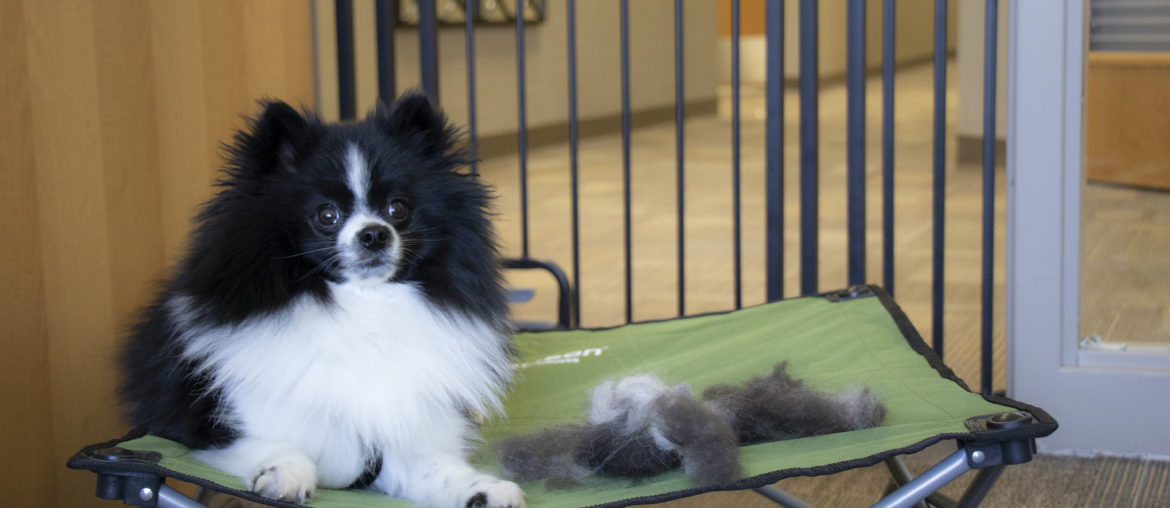 4 Tricks for Teaching Your Dog to Enjoy Being Brushed