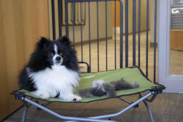Carlson Pet Products shares advice on how to have a positive grooming experience with your dog.