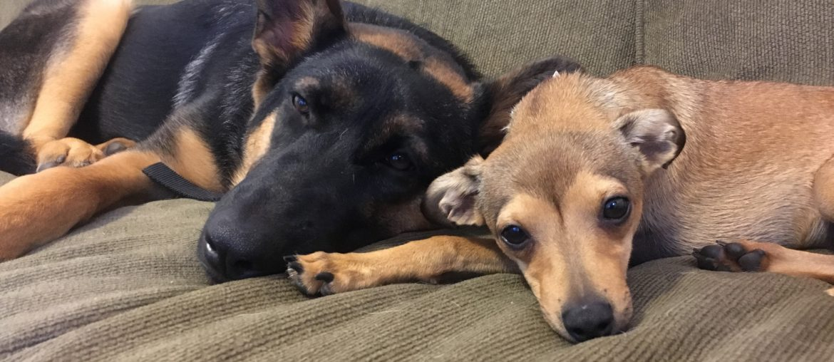 Rescue story: Kai and Evee Bring the Love