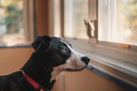 How to train your dog out of separation anxiety