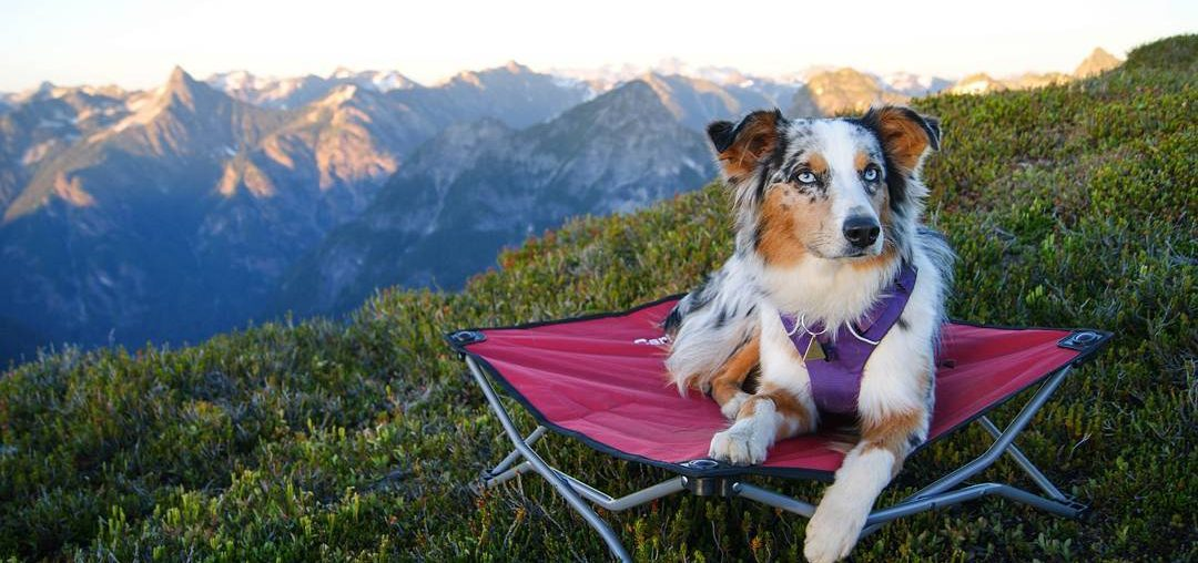 Things To Remember When Hiking With Your Dog Off Leash