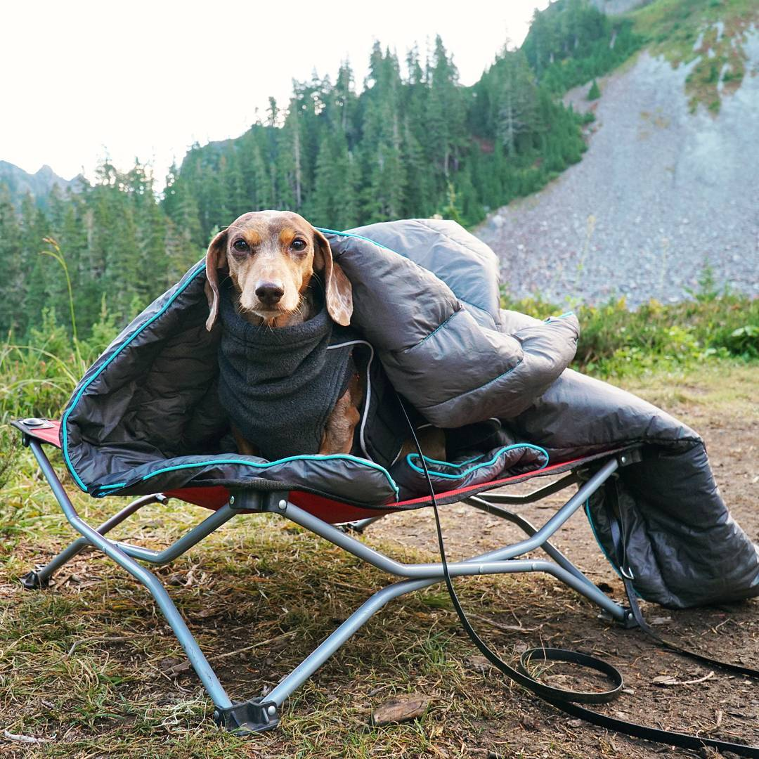 What to remember when hiking with your dog off leash
