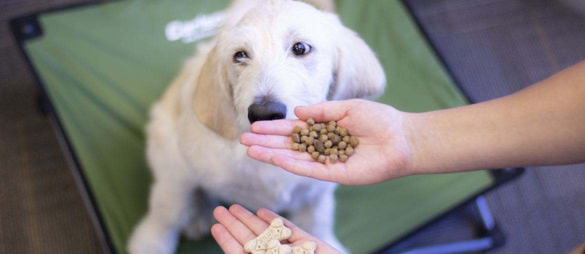How To Choose Training Treats For Your Dog