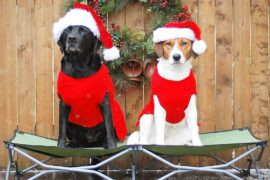 dangerous holiday items for pets