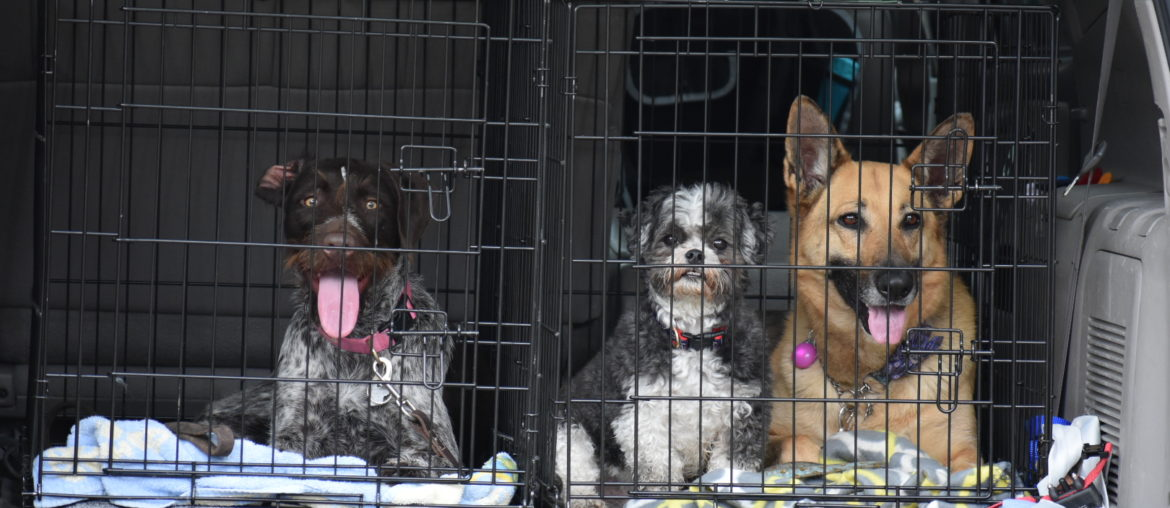 How to choose the type and size of dog crate