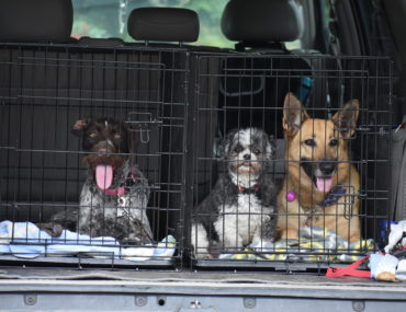 size of dog crate