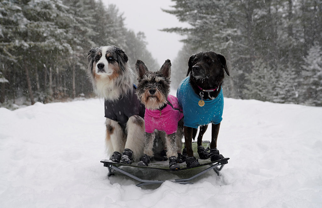 best dog-friendly trails