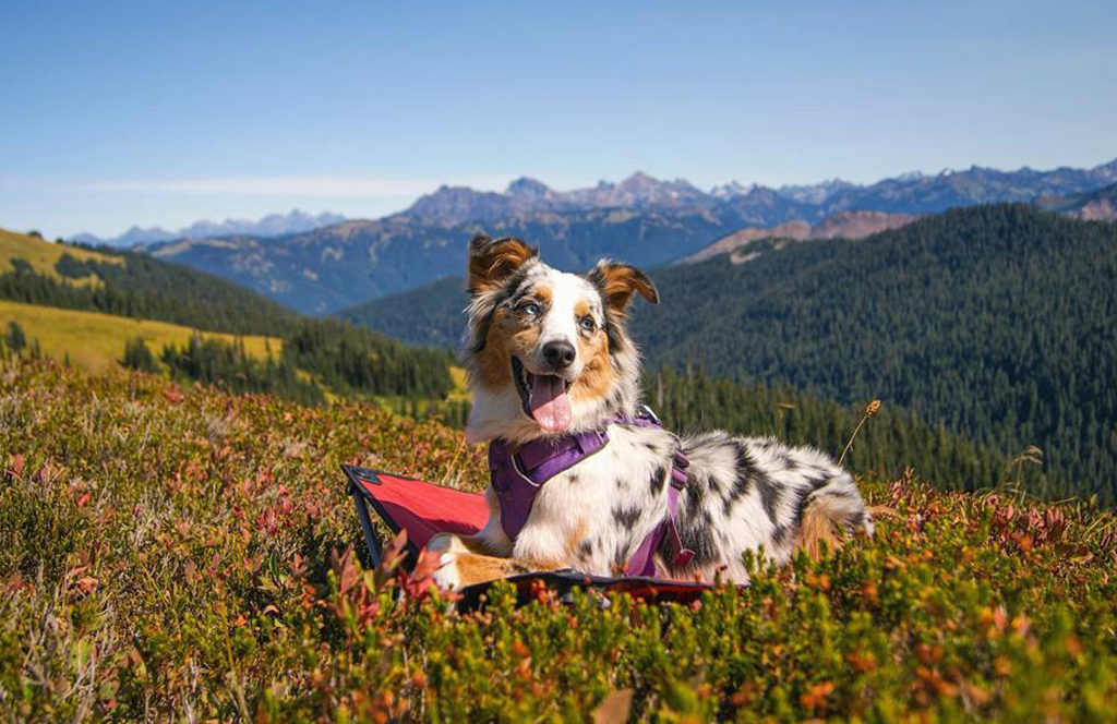 dog-friendly trails in the US