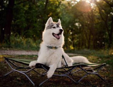 dog-friendly trails