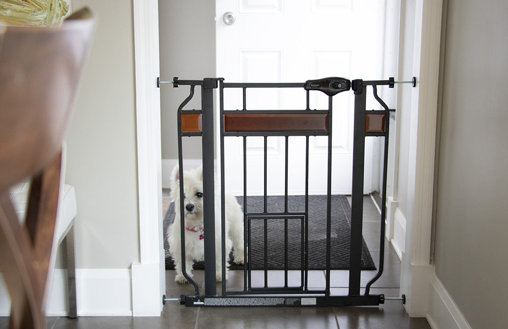 Small white dog behind a black pet gate that leads into a mud room
