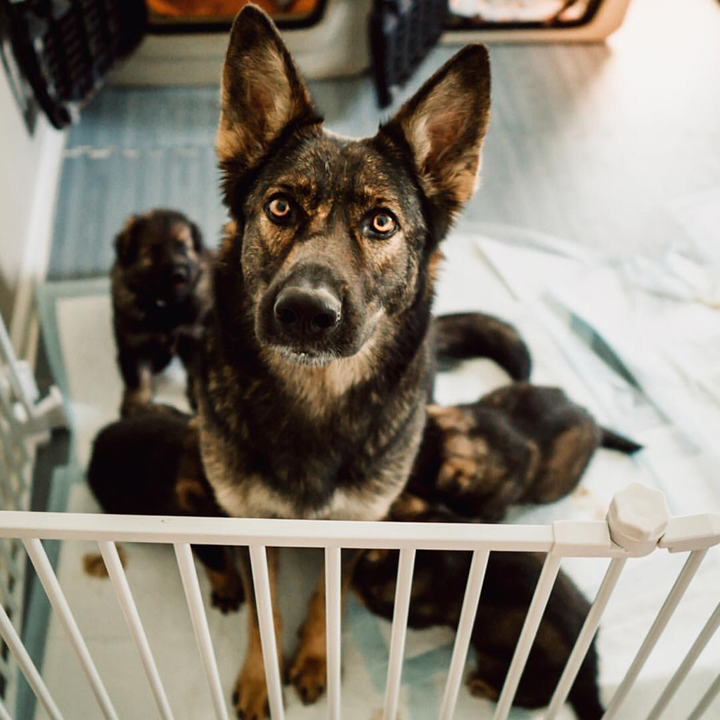 dog proof a home