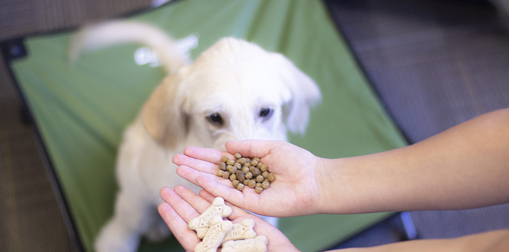 5 Tips to Stop Food Aggression in Dogs