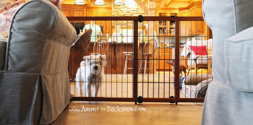 How to Dog Proof Your Home