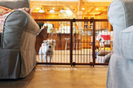 how to dog proof a home