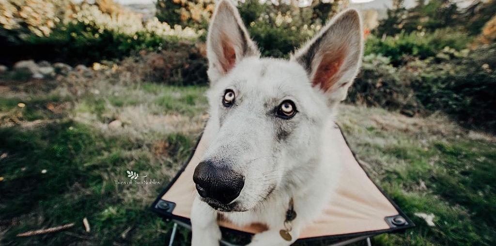 Understanding Dog Behavior and Solving Common Behavior Problems