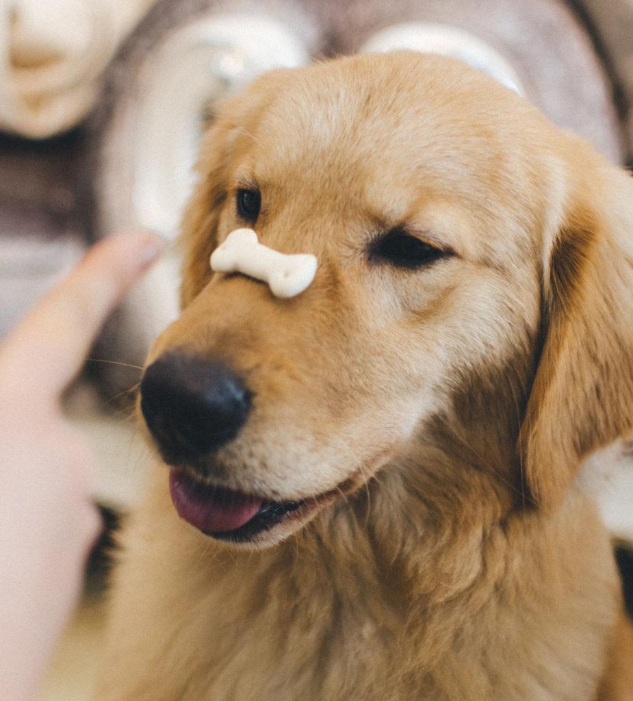 Dog balancing treat on nose