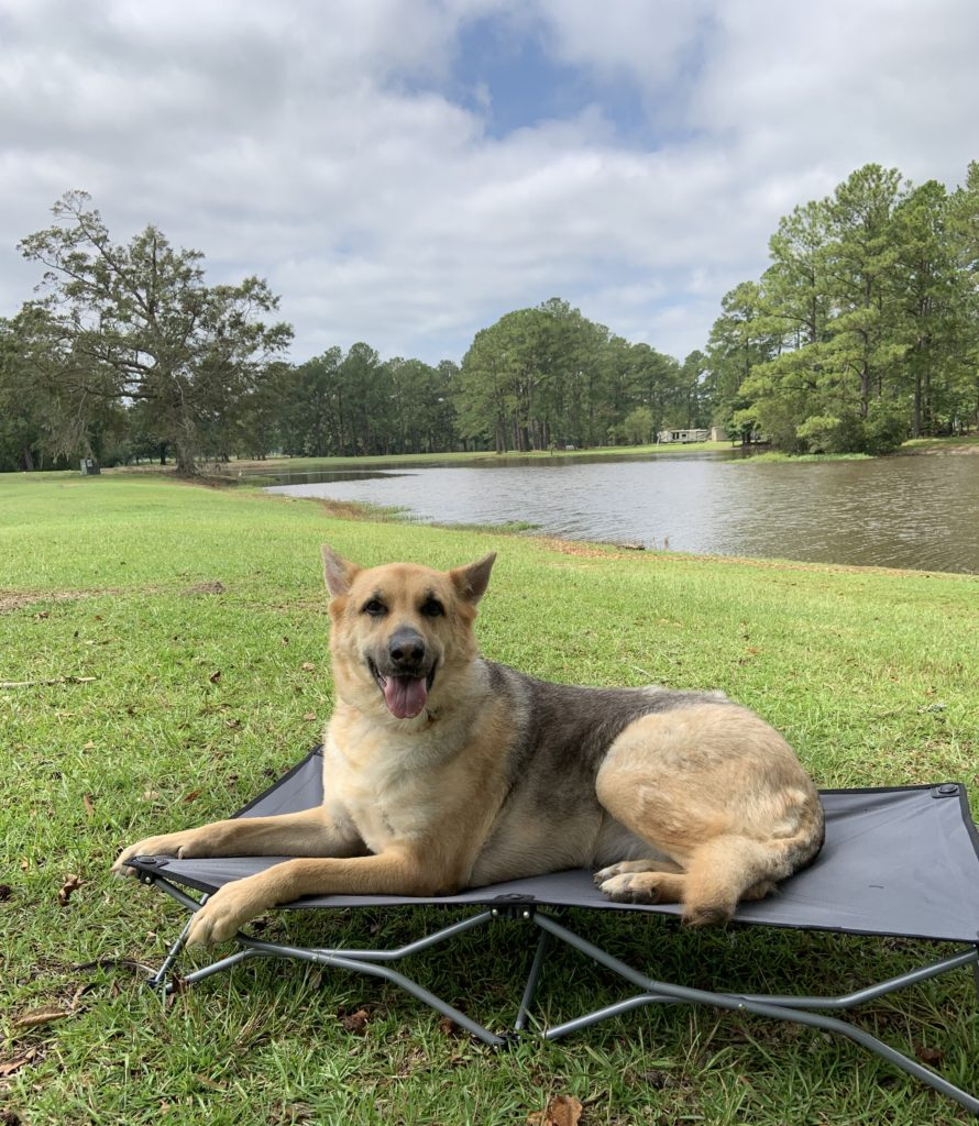 German Shepard dog laying on a large grey dog cot in front of a lake