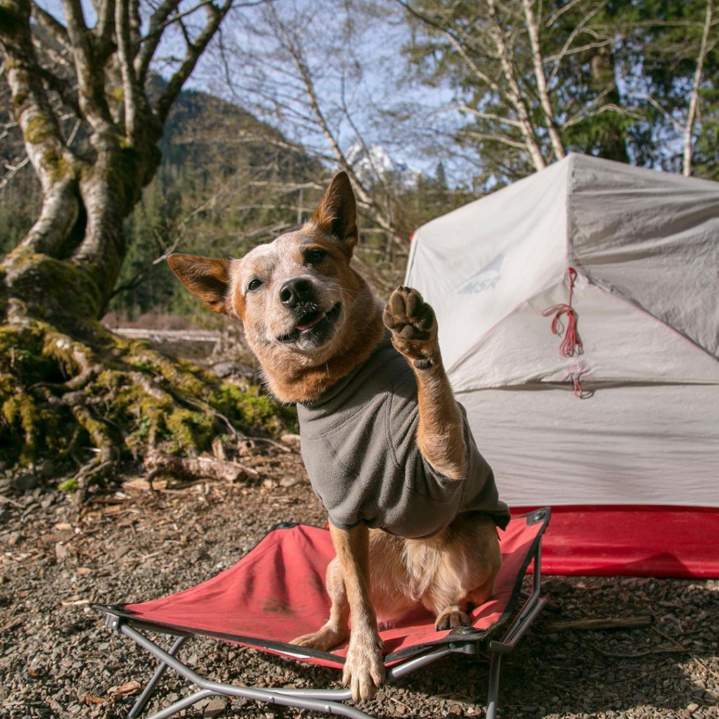 Dog sitting in front of a tent on a small red dog cot with his paw in the air like a high five