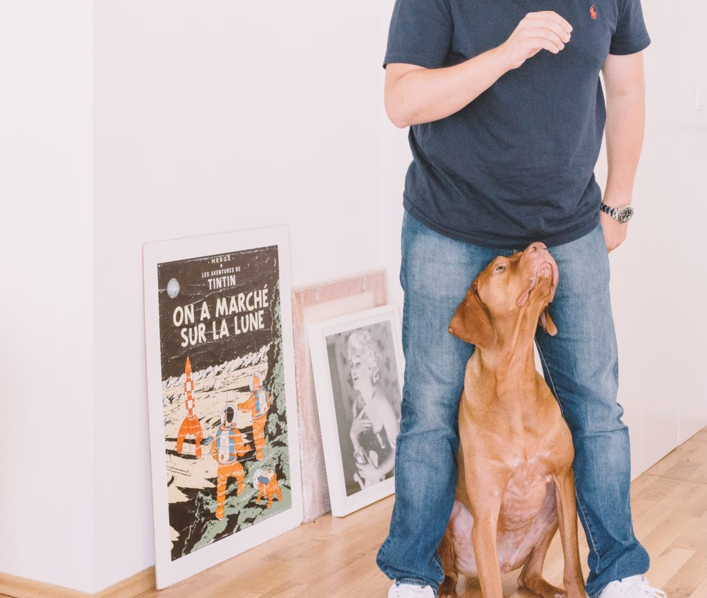 Man standing with dog between legs while he holds a treat above the dogs head so the dog looks up.
